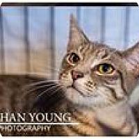 Adopt A Pet :: PJ - Fredericksburg, VA