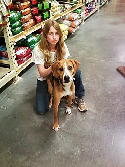 Catahoula Leopard Dog Mix Dog for adoption in Midlothian, Virginia - Slim
