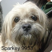Adopt A Pet :: Sparkey - baltimore, MD
