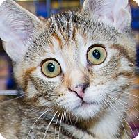 Adopt A Pet :: Izzy - Irvine, CA