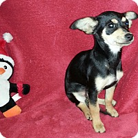 Adopt A Pet :: Marcie - San Diego, CA
