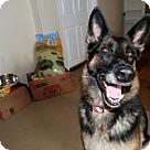 Adopt A Pet :: Sandy 4160