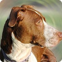 Adopt A Pet :: Daisy - Cincinnati, OH