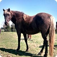 Adopt A Pet :: Sasha - Dewey, IL