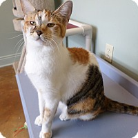 Adopt A Pet :: Cheddar - Lake Charles, LA