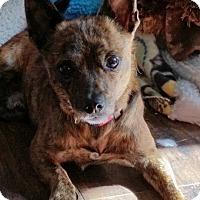 Adopt A Pet :: Carter - Garden City, MI