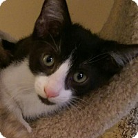 Adopt A Pet :: Razzamatazz - Royal Palm Beach, FL