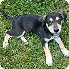 Adopt A Pet :: Ralphie - ADOPTION PENDING!