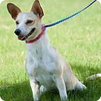 Adopt A Pet :: Lizzy - Laredo, TX