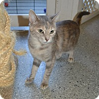 Adopt A Pet :: Gradie - Michigan City, IN