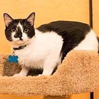 Adopt A Pet :: Miko - Santa Fe, TX