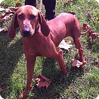 Adopt A Pet :: Reba - Metamora, IN