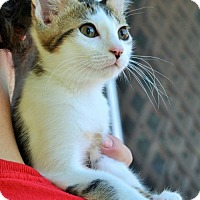 Adopt A Pet :: Homer - Lake Worth, FL