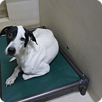 Adopt A Pet :: A36 AJ - Odessa, TX