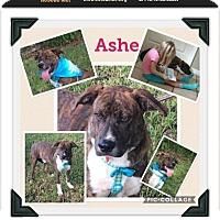 Adopt A Pet :: Ash - Homestead, FL