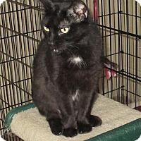 Adopt A Pet :: Mischief - Euclid, OH