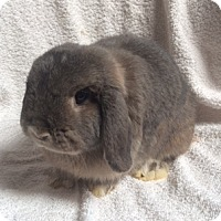 Adopt A Pet :: Nibbles - Fountain Valley, CA
