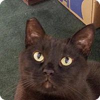 Adopt A Pet :: Buddy - Chattanooga, TN