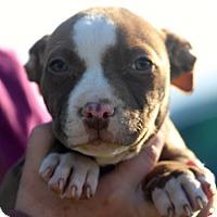 Adopt A Pet :: Buck~adopted! - Glastonbury, CT