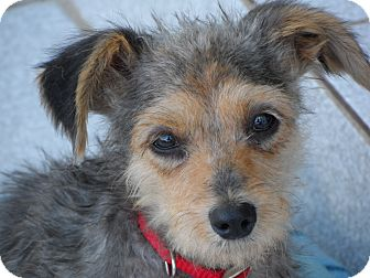 Adoptable Small Dogs In San Diego
