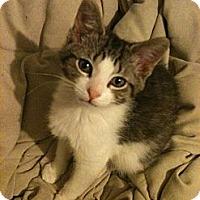 Adopt A Pet :: Ivan - Sterling Hgts, MI