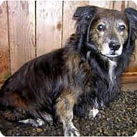Adopt A Pet :: Monte - Portland, OR