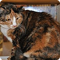 Adopt A Pet :: Carmella - Temple, PA