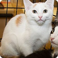 Adopt A Pet :: Miley - Irvine, CA