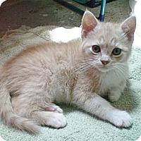 Adopt A Pet :: Dade - Byron Center, MI