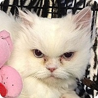Adopt A Pet :: Ava - Beverly Hills, CA