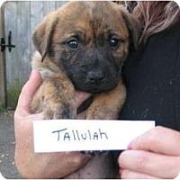 Adopt A Pet :: Tallulah - nashville, TN