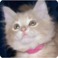 Adopt A Pet :: Jill - Annapolis, MD