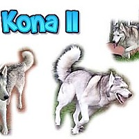 Adopt A Pet :: Kona II - Seminole, FL