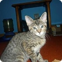 Adopt A Pet :: Zyrah - Milwaukee, WI