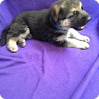 Adopt A Pet :: Rocky - Victorville, CA