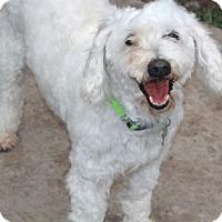 Adopt A Pet :: Weston-MEET HIM!! - Norwalk, CT