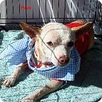 Adopt A Pet :: Pope - Las Vegas, NV