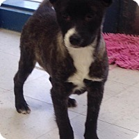 Adopt A Pet :: sheila Adoption Pending - East Hartford, CT