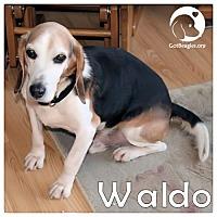 Adopt A Pet :: Waldo - Novi, MI