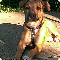 Adopt A Pet :: Artemis - Albert Lea, MN
