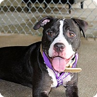 Adopt A Pet :: Linus - Lake Worth, FL