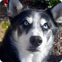 Adopt A Pet :: Caiden - Roswell, GA