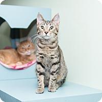 Adopt A Pet :: Marlin - Chicago, IL