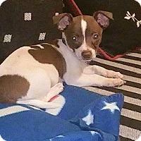 Adopt A Pet :: Pablo - Alpharetta, GA