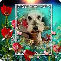 Adopt A Pet :: George - Crowley, LA