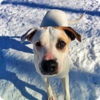Adopt A Pet :: Taegan - Grand Rapids, MI