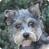 Adopt A Pet :: Dorie - Atlanta, GA