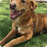 Adopt A Pet :: Zack - Santa Ana, CA