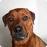 Adopt A Pet :: ROCKY - Murray, UT