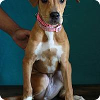 Adopt A Pet :: Cocoa - Waldorf, MD